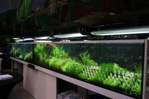 Unsere Wasserpflanzenverkaufsanlage