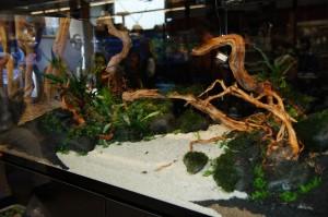 So sah das Aquarium noch ohne Wasser aus.