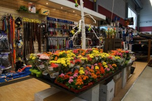 Frühlingsfest bei Burda