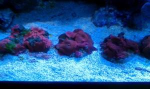 Korallen