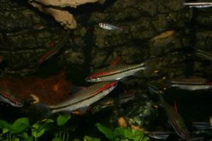 Süßwasserfische