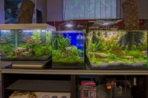Verschiedene Nano-Aquarien
