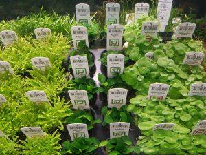 Süßwasserpflanzen