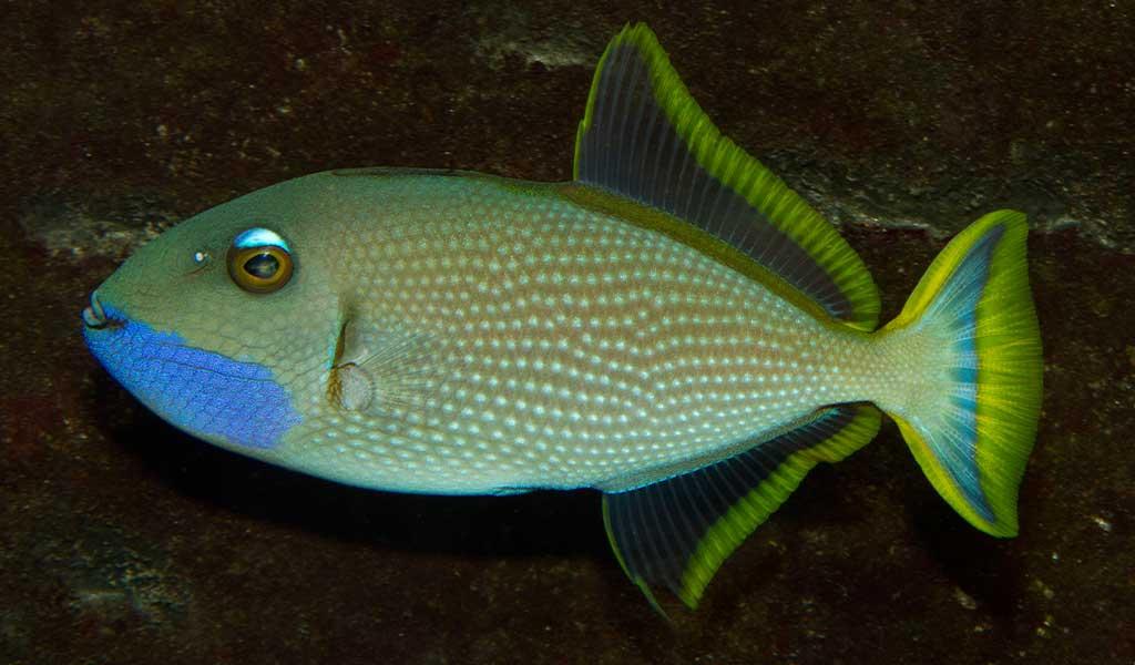 Fisch-03
