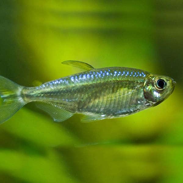 suesswasserfisch-01-neu-neu