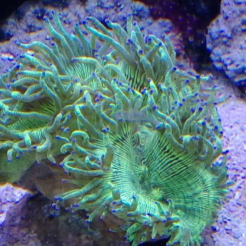 Korallen-04-19-08-21