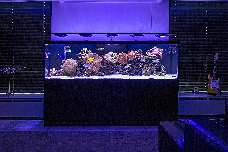 aquarien aus unserem haus burdas tierwelt. Black Bedroom Furniture Sets. Home Design Ideas