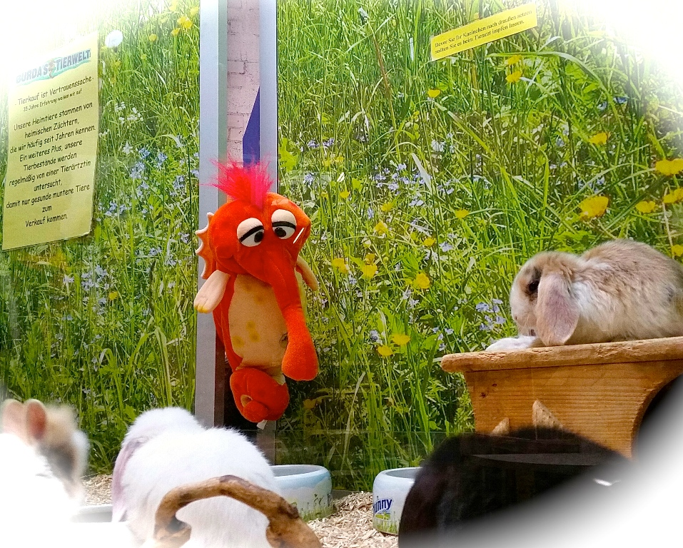 Burschi bei den Kaninchen